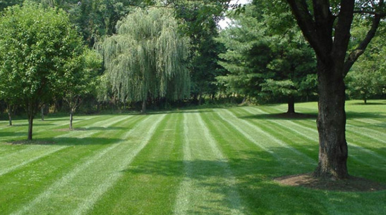 Image result for Looking for Landscaping Companies 72032?